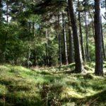 Waldbestattung2 Rita Riepe Bestattungen